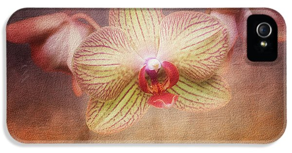 Orchid iPhone 5s Case - Cymbidium Orchid by Tom Mc Nemar