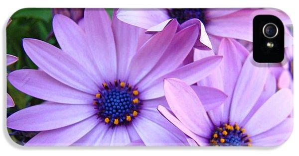 Daisies Lavender Purple Daisy Flowers Baslee Troutman IPhone 5s Case
