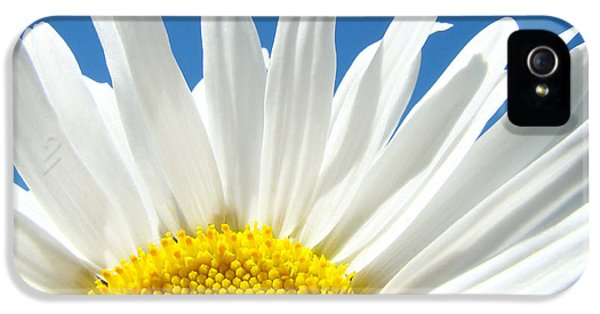 Daisy iPhone 5s Case - Daisy Art Prints White Daisies Flowers Blue Sky by Baslee Troutman