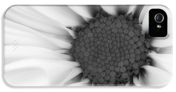 Daisy iPhone 5s Case - Daisy Flower Macro by Tom Mc Nemar