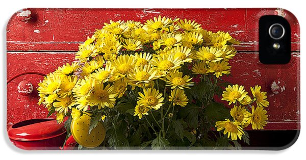Daisy Plant In Drawers IPhone 5s Case