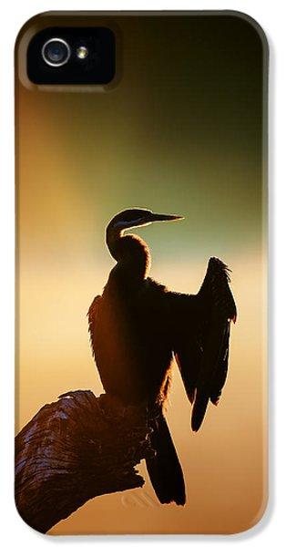 Anhinga iPhone 5s Case - Darter Bird With Misty Sunrise by Johan Swanepoel