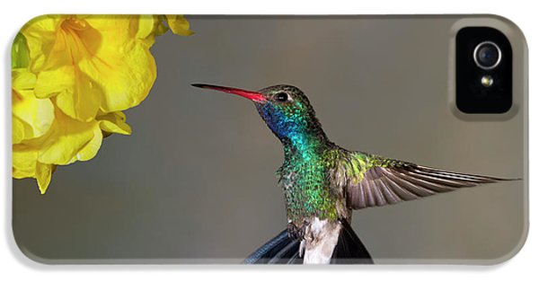Humming Bird iPhone 5s Case - Delicate by Janet Fikar