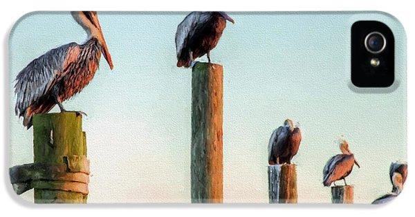 Destin Pelicans-the Peanut Gallery IPhone 5s Case