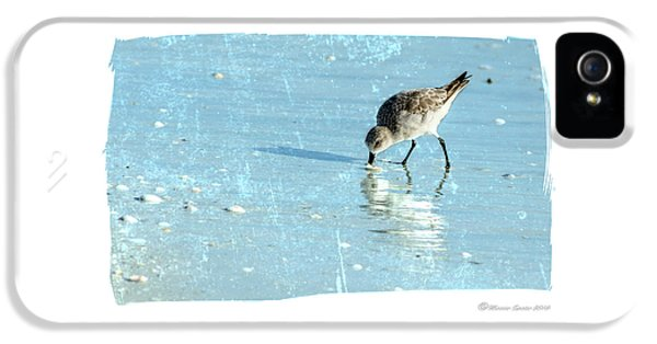 Sandpiper iPhone 5s Case - Dig In by Marvin Spates