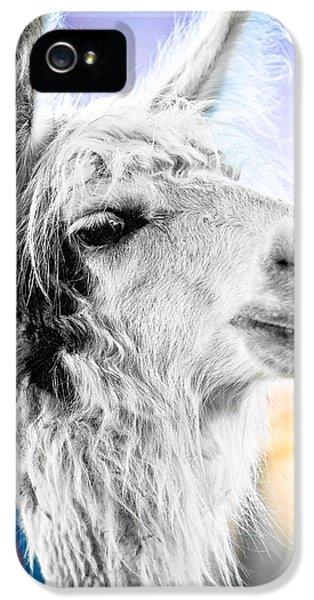Dirtbag Llama IPhone 5s Case by TC Morgan