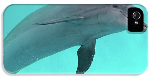 Dolphin IPhone 5s Case by Sandy Keeton