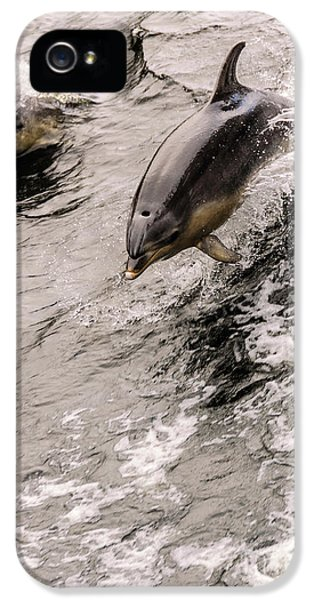 Dolphins IPhone 5s Case by Werner Padarin
