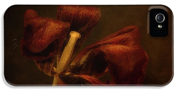 Tulip iPhone 5s Case - Dried Tulip Blossom 2 by Scott Norris