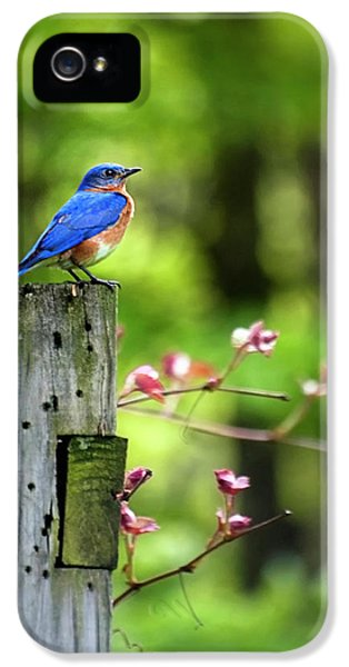 Eastern Bluebird IPhone 5s Case