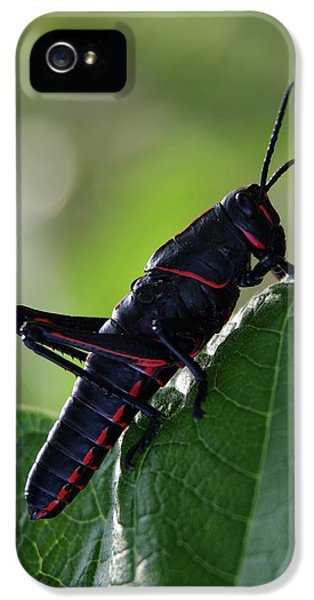 Eastern Lubber Grasshopper IPhone 5s Case by Richard Rizzo