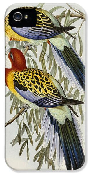 Eastern Rosella IPhone 5s Case by John Gould