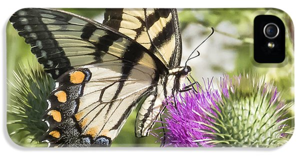 Eastern Tiger Swallowtail IPhone 5s Case by Ricky L Jones
