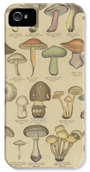 Edible And Poisonous Mushrooms IPhone 5s Case by French School