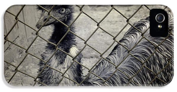 Emu At The Zoo IPhone 5s Case by Luke Moore