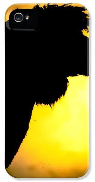Endless Alpaca IPhone 5s Case by TC Morgan