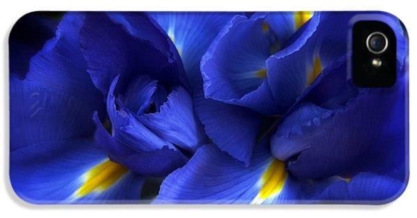 Evening Iris IPhone 5s Case by Jessica Jenney