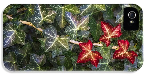 IPhone 5s Case featuring the photograph Fall Ivy Leaves by Adam Romanowicz