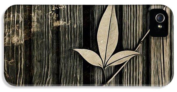 iPhone 5s Case - Fallen Leaf by John Edwards