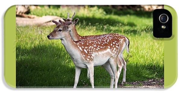 Fallow Deer In Richmond Park IPhone 5s Case