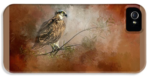 Osprey iPhone 5s Case - Farsighted Wisdom by Marvin Spates
