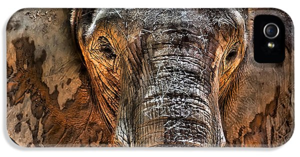 Elephant iPhone 5s Case - Fearless by Janet Fikar
