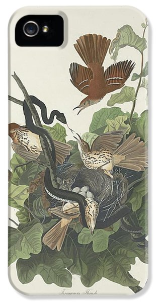 Ferruginous Thrush IPhone 5s Case