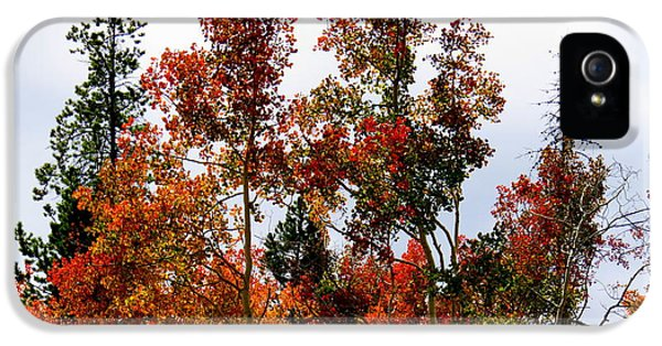 Festive Fall IPhone 5s Case by Karen Shackles