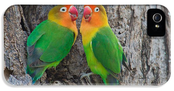 Lovebird iPhone 5s Case - Fischers Lovebird Agapornis Fischeri by Panoramic Images