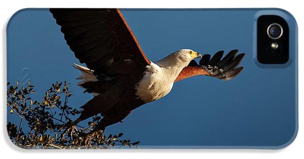 Eagle iPhone 5s Case - Fish Eagle Taking Flight by Johan Swanepoel