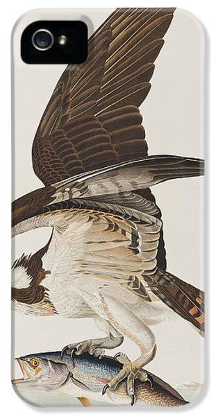 Osprey iPhone 5s Case - Fish Hawk Or Osprey by John James Audubon
