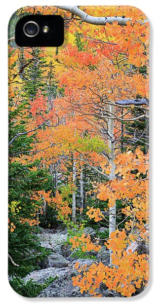 Flaming Forest IPhone 5s Case