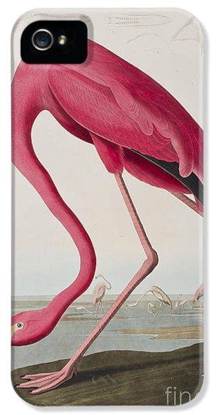 Flamingo IPhone 5s Case by John James Audubon