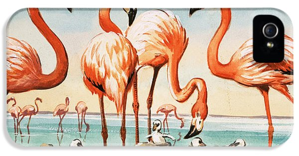 Flamingoes IPhone 5s Case by English School
