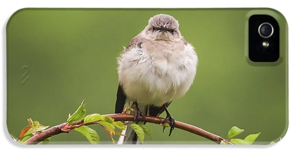 Fluffy Mockingbird IPhone 5s Case by Terry DeLuco