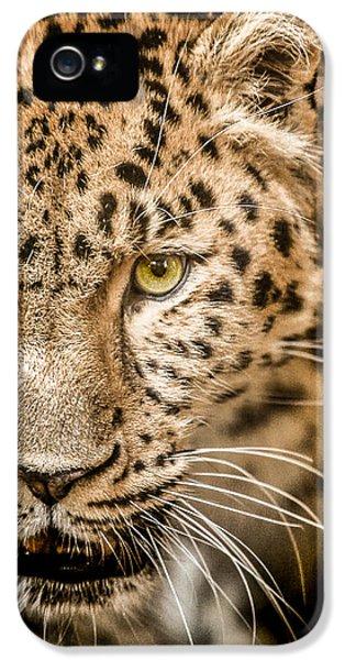 Leopard iPhone 5s Case - Focus by Paul Neville