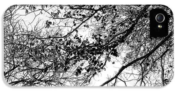 Featured Images iPhone 5s Case - Forest Canopy Bw by Az Jackson