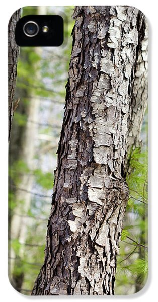 Forest Trees IPhone 5s Case by Christina Rollo
