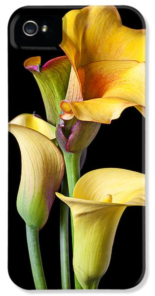 Lily iPhone 5s Case - Four Calla Lilies by Garry Gay