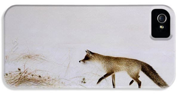 Fox In Snow IPhone 5s Case by Jane Neville