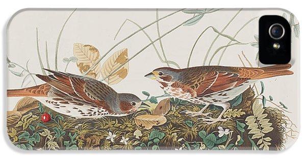 Fox Sparrow IPhone 5s Case by John James Audubon