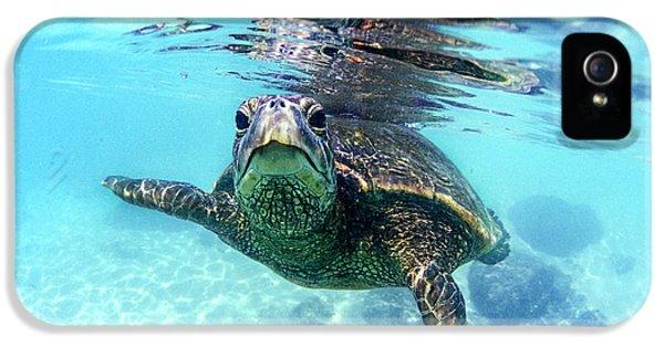 friendly Hawaiian sea turtle  IPhone 5s Case by Sean Davey