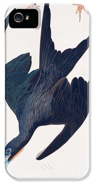 Frigate Penguin IPhone 5s Case by John James Audubon