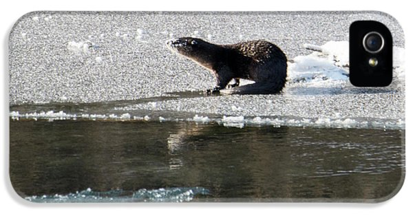 Frosty River Otter  IPhone 5s Case by Mike Dawson