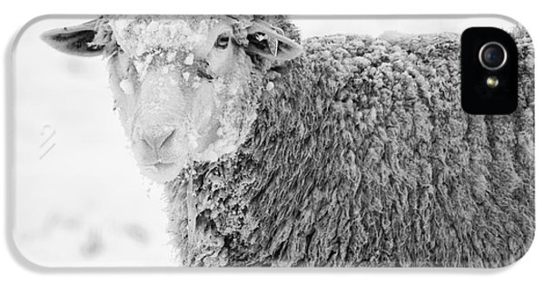 Sheep iPhone 5s Case - Frozen Dinner by Mike  Dawson