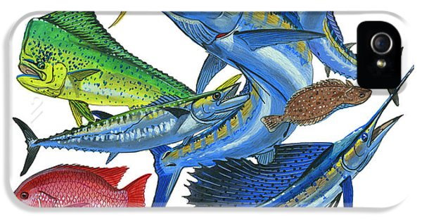 Gamefish Collage IPhone 5s Case by Carey Chen