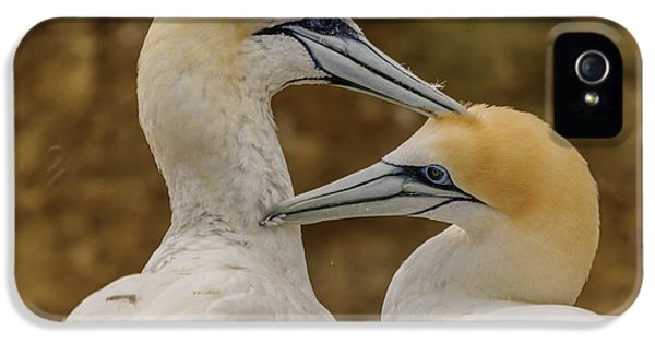 Gannets 4 IPhone 5s Case by Werner Padarin