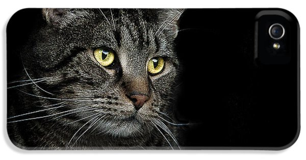 Cat iPhone 5s Case - Gaze  by Paul Neville