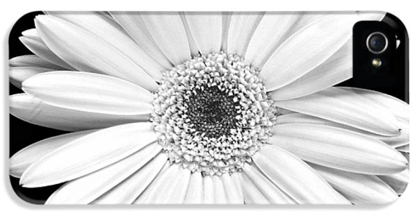 Floral iPhone 5s Case - Single Gerbera Daisy by Marilyn Hunt