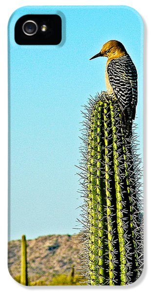 Gila Woodpecker On Saguaro In Organ Pipe Cactus National Monument-arizona IPhone 5s Case by Ruth Hager